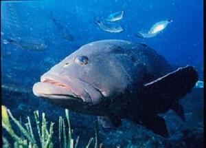 Những cuộc Săn cá trời Âu