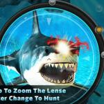 Săn cá mập